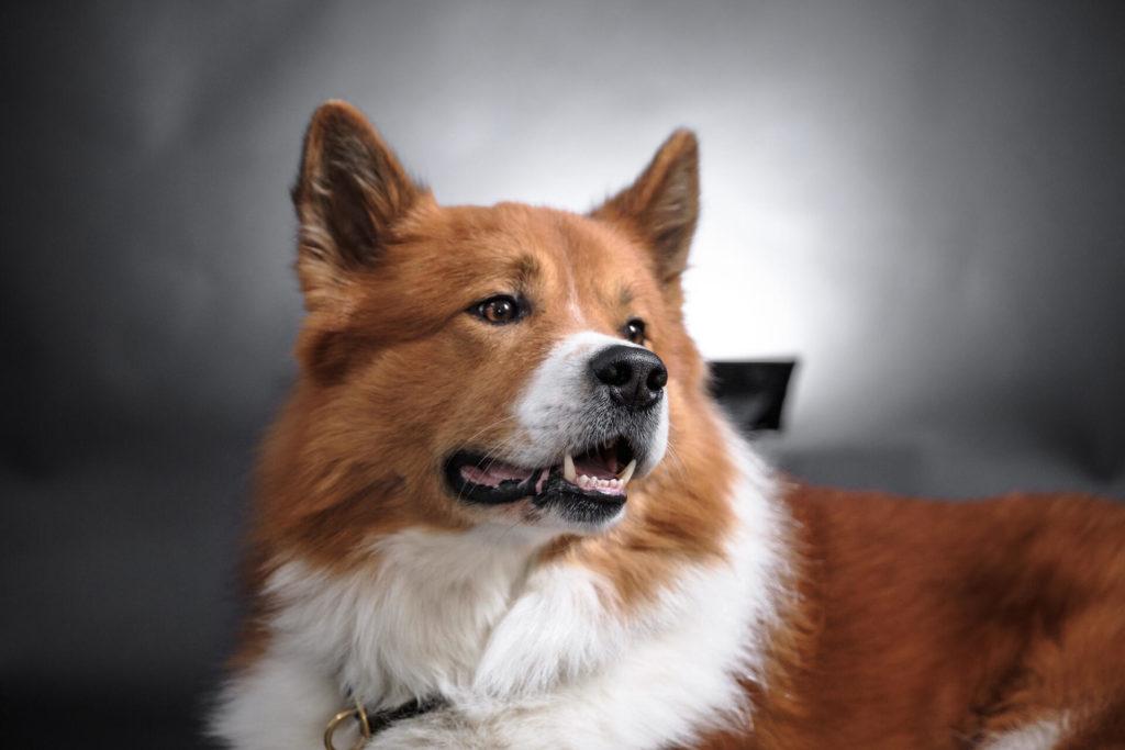Agenturhund am Arbeitsplatz als Mitarbeiterbenefit