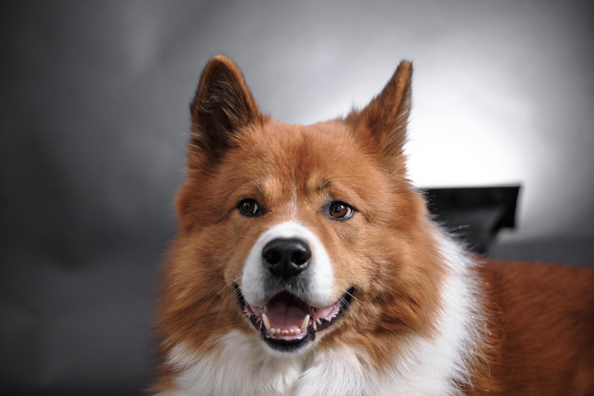 Bürohund Gismo als Maßnahme in der Mitarbeiterbindung