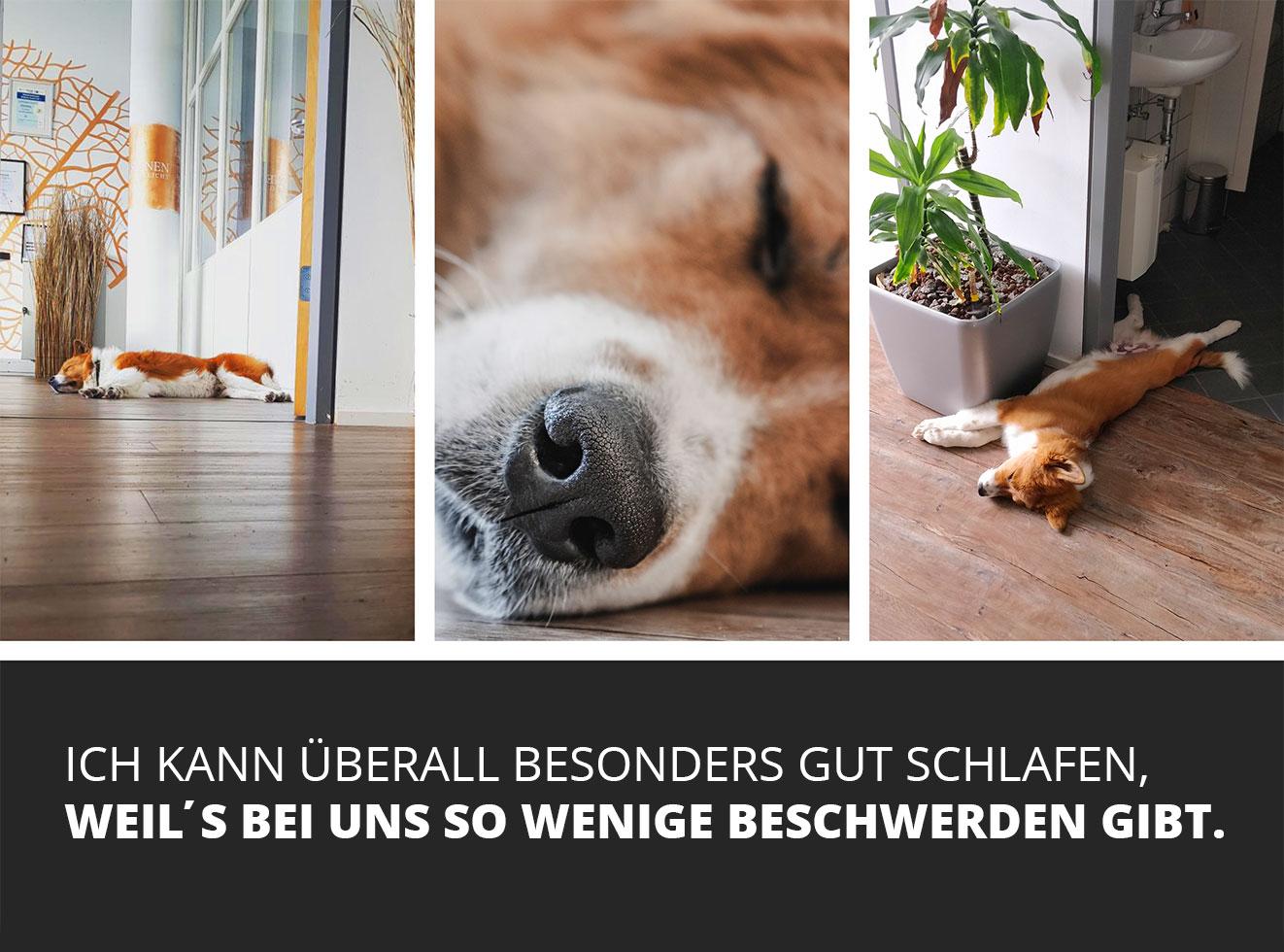 beste-werbeagentur-nürnberg-besonders-sein-agenturhund-gismo